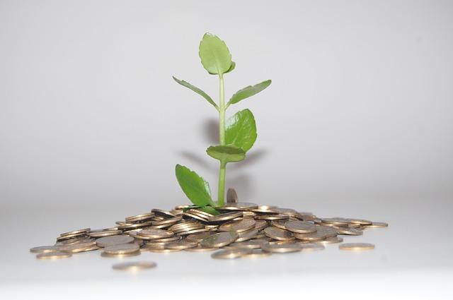 monety i roślina